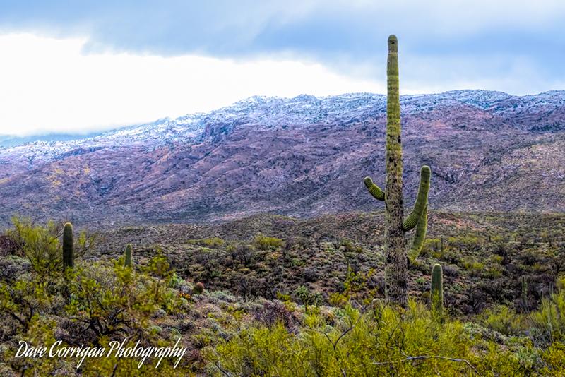 Snow in the desert. This doesn't happen often.